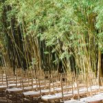 Bamboo garden ceremony at NOVA 535 in St. Pete