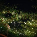 Exotic, Lush Tall Bamboo Garden in Courtyard, Outdoor String Market Lights | Downtown St. Pete Unique Wedding Venue NOVA 535