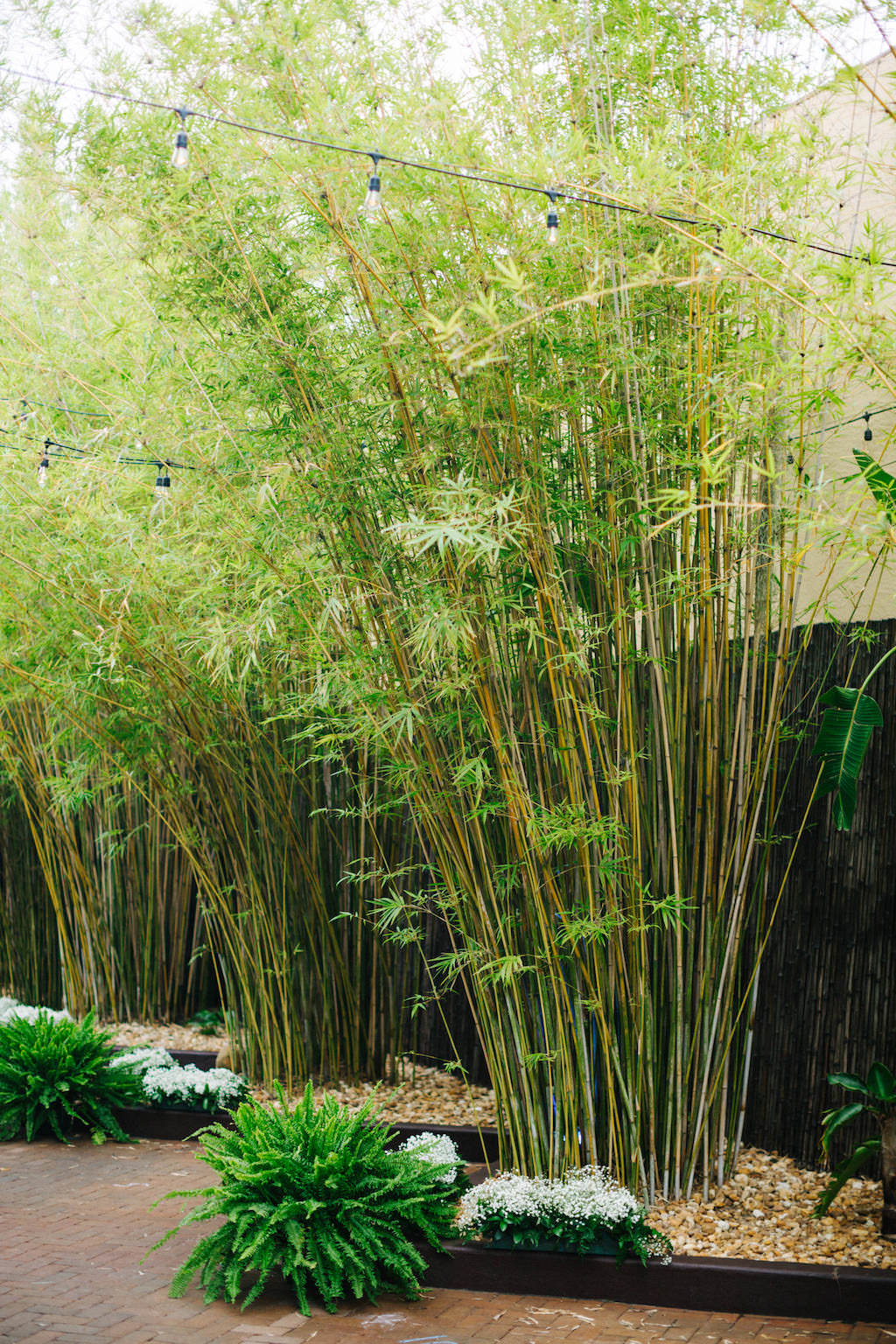 Exotic, Lush Tall Bamboo Garden in Courtyard, Greenery Floral Wedding Decor, Outdoor String Lights | Downtown St. Pete Unique Wedding Venue NOVA 535