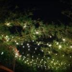 Exotic, Lush Tall Bamboo Garden in Courtyard, Outdoor String Market Lights | Downtown St. Pete Unique Wedding Venue NOVA 535